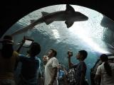 Acuario de Veracruz, vitrina de las maravillas del mundo acuático