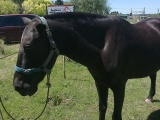 En aumento robo de caballos en zona de la Cuenca