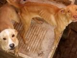 Perros devoran a otro, vecinos piden castigo para su dueño
