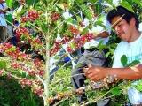 Ante crisis, campesinos diversifican