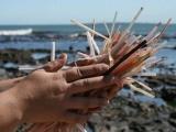 Ayuntamientos deben reglamentar el NO uso de popotes y plásticos en sus reglamentos