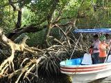 Reforestarán marinos y ciudadanos la zona del manglar en Mandinga