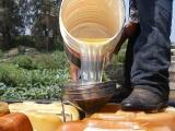 Asegura PGR seis mil litros de hidrocarburo en Omealca