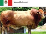 """El toro """"Veracruz"""" obtuvo el título de Campeón de Norteamérica"""