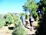 Reconectarse con la naturaleza viviendo la Navidad