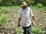 """Con """"recorte"""" se desperdicia vocación agropecuaria de Veracruz"""