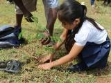 Sembrarán árboles en escuelas para reducir daños por Cambio Climático