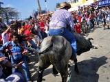 Protegerán a toros en fiestas de Tlacotalpan