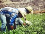 Sin dinero para Mercados Agropecuarios