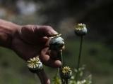 Advierten aumento en consumo de heroína, piden tomar medidas preventivas