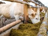 Aprobó Congreso de la Unión 90% de temas ganaderos