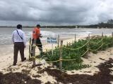 Sin peligro para Veracruz depresión tropical 14