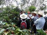 Piden productores atención a problemática de precio del café