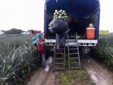 Abandonados campos agrícolas en el municipio de Isla