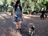 Perros deberán salir a la calle con pechera y correa: Ayuntamiento de Veracruz