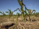 Se mantendrá sequía en próximos meses