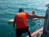 Rescata Armada de México a 2 cayakistas en inmediaciones de la isla de Sacrificios
