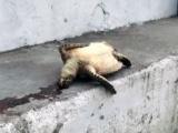 Hallan 80 tortugas muertas en el litoral veracruzano: Acuario de Veracruz