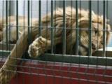 Zoológico de Veracruz opera sin apoyo de Profepa