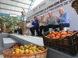 Anuncia Gobernador 15 mdp para productores citrícolas