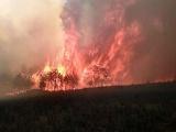 Un ecocidio el incendio forestal en Perote