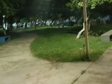 Piden a vecinos denunciar  robo y vandalismo a luminarias  del parque  Los Pinitos