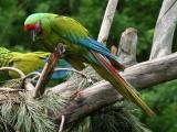 Investiga autoridades robo de guacamaya en zoológico de Veracruz