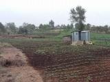 Desprotegen autoridades sector agropecuario ante el cambio climático