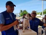Registra DMAYPA 12 reportes diarios por maltrato animal