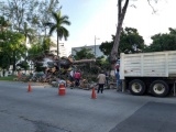 Piden poda de  arboles y reforestación  en las avenidas Díaz Mirón y Circunvalación