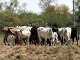 Capacitan a ganaderos para acceder a Seguro Catastrófico