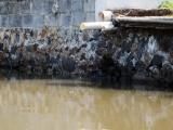 Acusa Regidor a PMA de dilación en caso de denuncias por contaminación del río Jamapa