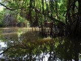 Autoridades no frenan destrucción del manglar
