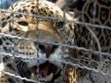 Grave la caza ilegal de especies