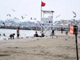 Pide alcalde de Veracruz a Gobierno Estatal uso de fuerza pública para desalojar playas
