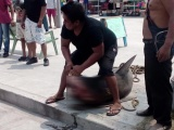Pescadores de Villa del Mar capturan tiburón