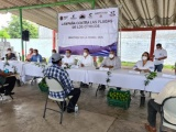Combaten langosta centroamericana en Huasteca