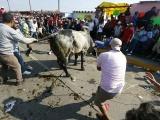 Tlacotalpan: sanción de 20 mil por daño a toros