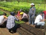 Un fracaso en Veracruz programa Sembrando Vida