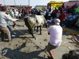 Impunidad en maltrato animal