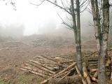 Denuncian tala ilegal en Las Vigas