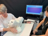 Acariciar robot peludo llena vacío por pandemia