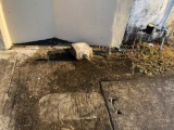 Continúa el robo de tubería de cobre a viviendas