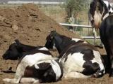 Más que por el Covid, ganaderos preocupados por la sequía