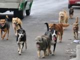 Sigue el abandono de mascotas durante contingencia sanitaria