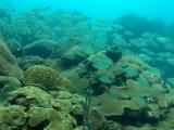Cuarentena da tregua a fauna marina del Parque Arrecifal  Veracruzano