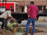 Comienza siembra de árboles en el Malecón de Veracruz