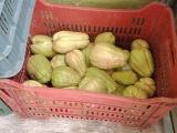 Sin afectaciones en distribución de frutas y verduras por Grace en puerto de Veracruz